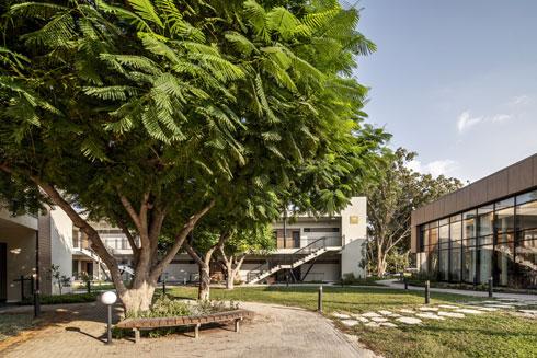צאלונים ותיקים בלב החצר המטופחת, שאליה פונות המרפסות (צילום: סטודיו יואב פלד)