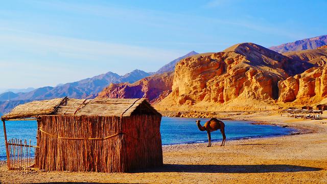 חצי האי סיני (צילום: shutterstock)