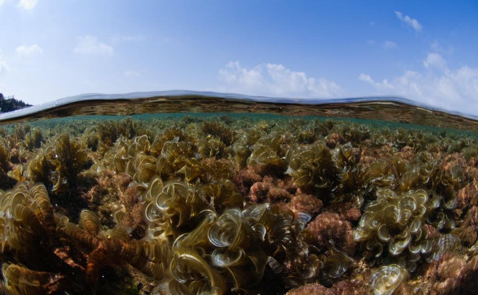 מיקרו אצות - יצורים מיקרונים שאחראיים על 70 אחוזים מהחמצן שאנחנו נושמים.  (צילום: חגי נתיב)