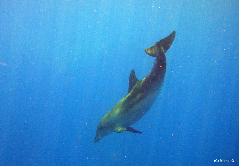בשנות ה-90 ביולוגים ימיים לא הבינו ביונקים וחוקרי יונקים לא הבינו בים. היום המצב שונה לחלוטין.  (צילום: מיכל גרוסוביץ')