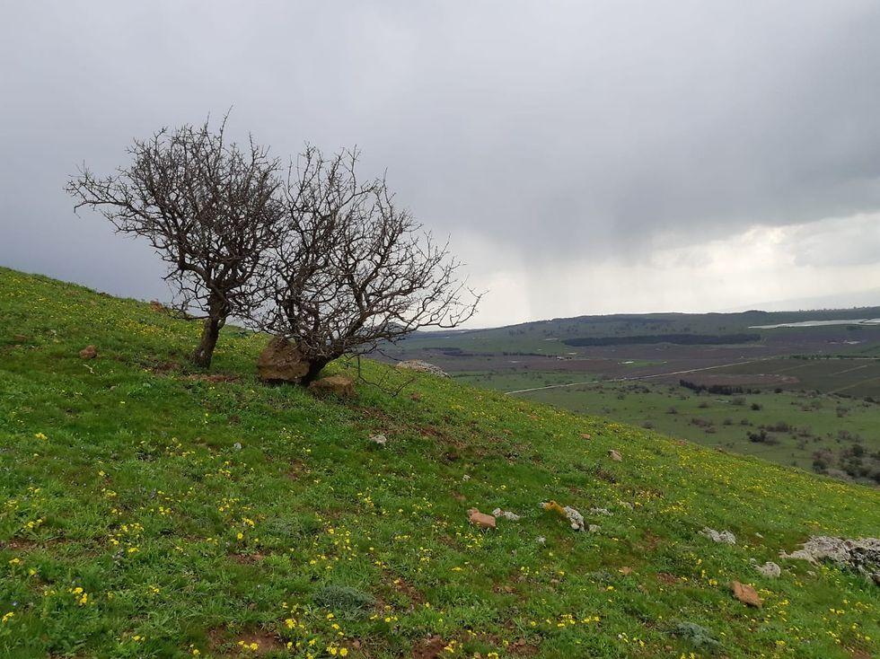 שמורת הר בנטל (צילום: עידו שקד, רשות הטבע והגנים)