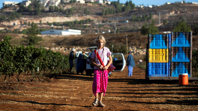 A young girl, part of a group of volunteers for the U.S.-based Christian group HaYovel, looks on as others harvest grapes at a vineyard on the outskirts of Har Bracha settlement