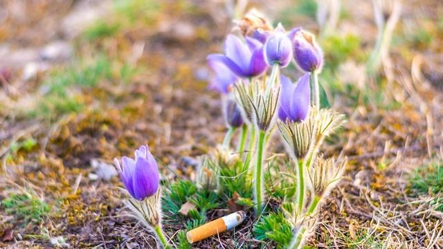 בדל סיגריה בטבע (צילום: shutterstock)