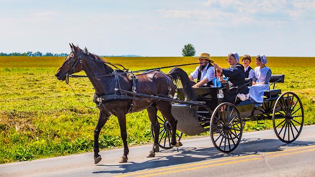 אילוסטרציה בני קהילת האמיש אמיש כרכרה סוס  (צילום: shutterstock)