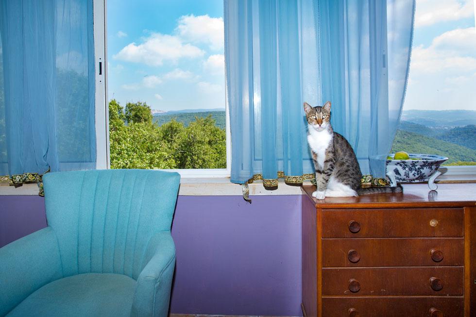לצד המעצבים גרים במקום 40 חתולים ורועה גרמני (צילום: ענבל מרמרי)