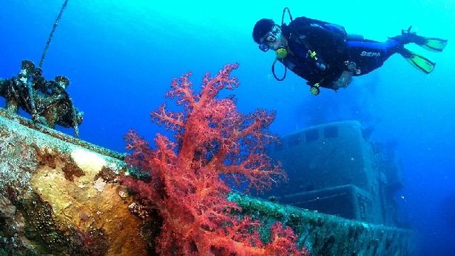 אלמוגים במפרץ אילת ( צילום: ד
