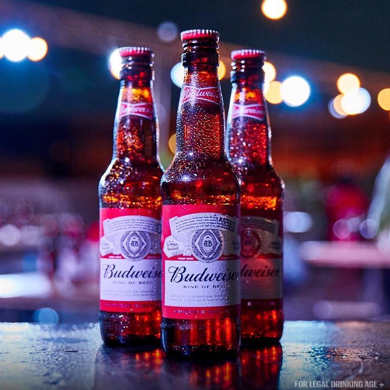 בירה באדוויזר (צילום: יח