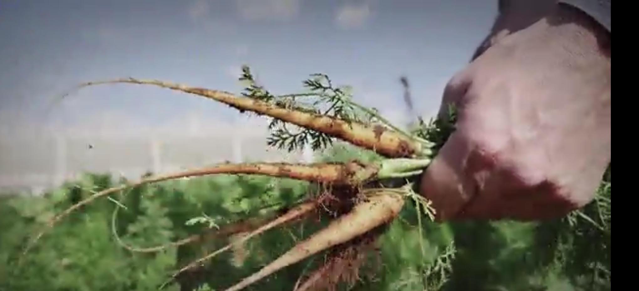 צרור ירקות,