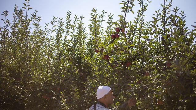 Noraldeen Masoud works on his farmland (Photo: AP)