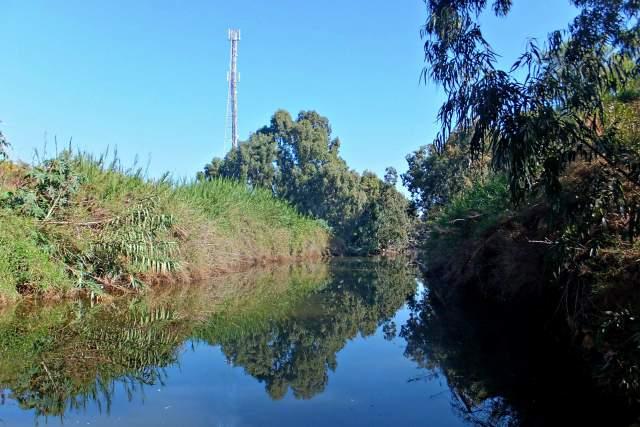 Заросли вдоль берегов Реки Хадера. Фото: Леон Левитас
