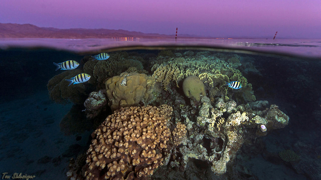 שקיעה אילת ים סוף (צילום: רויטרס)