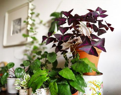 לא כדאי להצמיד שני צמחים בעלי גוון זהה. הם יהפכו לכתם אחד (צילום: רינת טל)