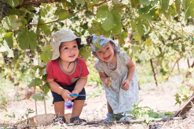 Фестиваль сбора винограда в Ифтахэле. Фото: Адва Офир