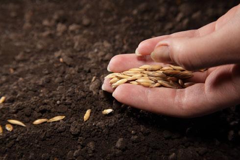 הרעיון הוא לזרוע יותר זרעים ממה שבאמת צריך ולצפות ל-50% הצלחה, כלומר שלפחות חצי מהזרעים יקלטו ויהפכו לצמח משגשג ופורח (צילום: Shutterstock)