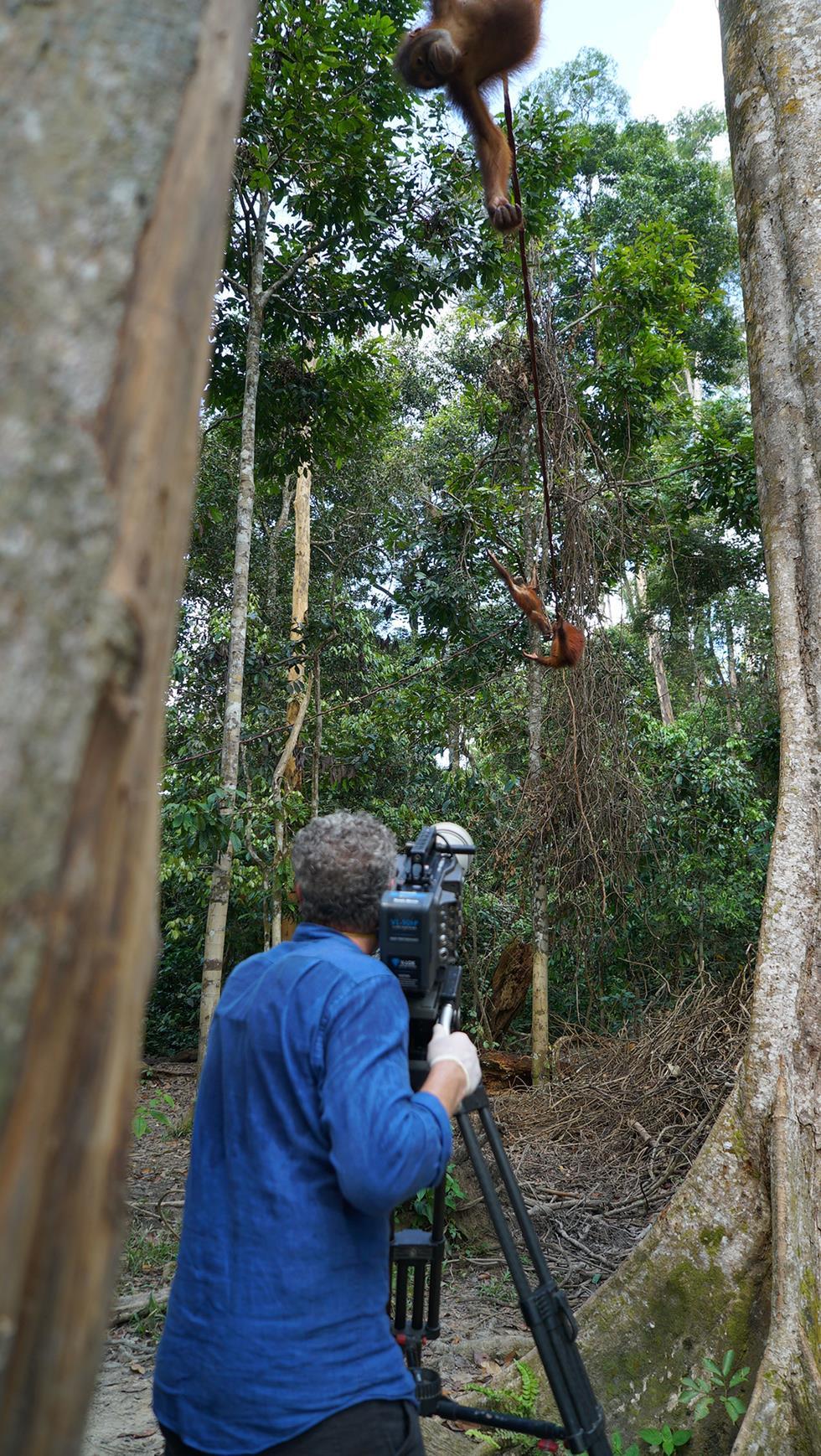 צלם הטבע גורדון ביוקנן מצלם את האורנג-אוטנים בשמורה (צילום: Dragonfly Film & TV Ltd)