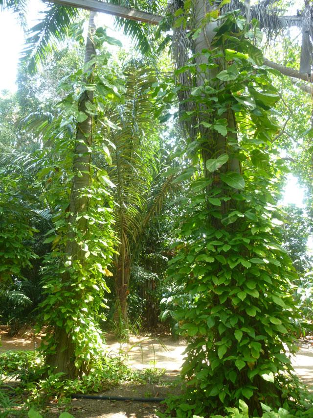 Сад тропической флоры. Фото: Леон Левитас