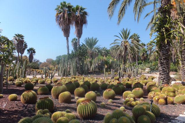 Сад кактусов. Фото: Леон Левитас