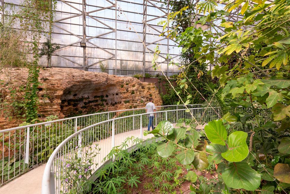 קולומבריום עתיק נחשף בעת הבנייה, ומתוארך לימי בית שני. בתוך גומחותיו נשתלו מינים של סטפליות בשרניות (צילום: ליאור גרונדמן)