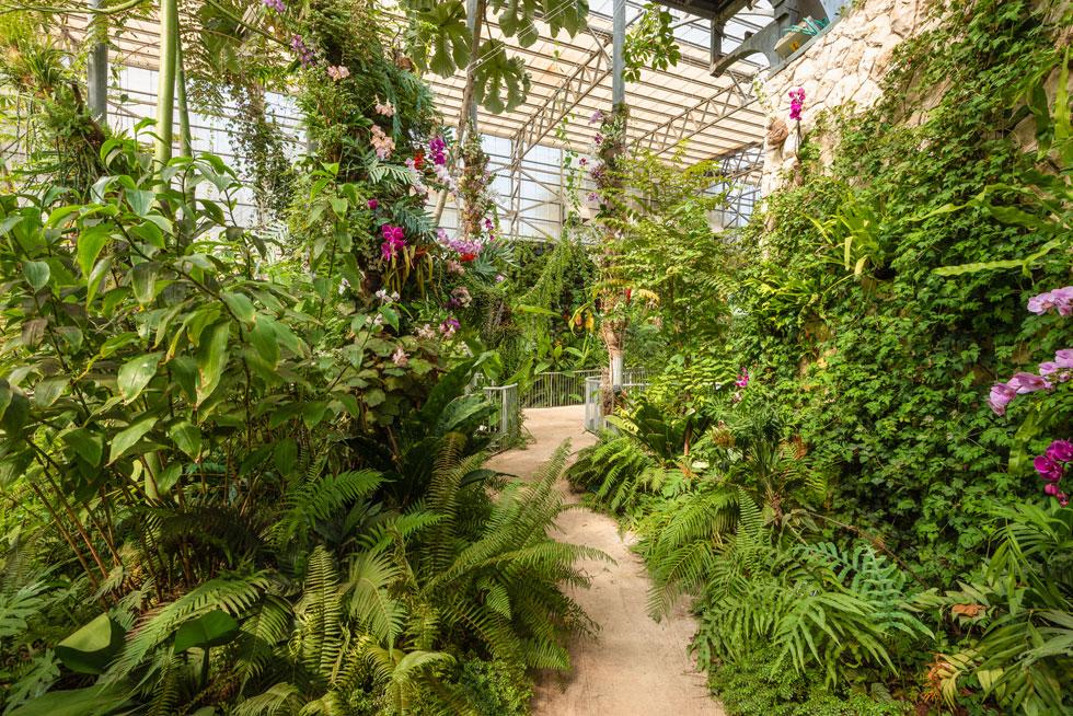 הצמחייה עוד תטפס ותמלא את המבנה הגבוה. בהנהלת הגן שוקלים להוסיף בעלי חיים, כדי להשלים את חוויית הביקור ב''ג'ונגל'' (צילום: ליאור גרונדמן)