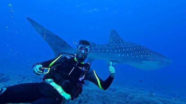 צלילה בשונית טובטאהה בים סולו שבפיליפיניםה ()
