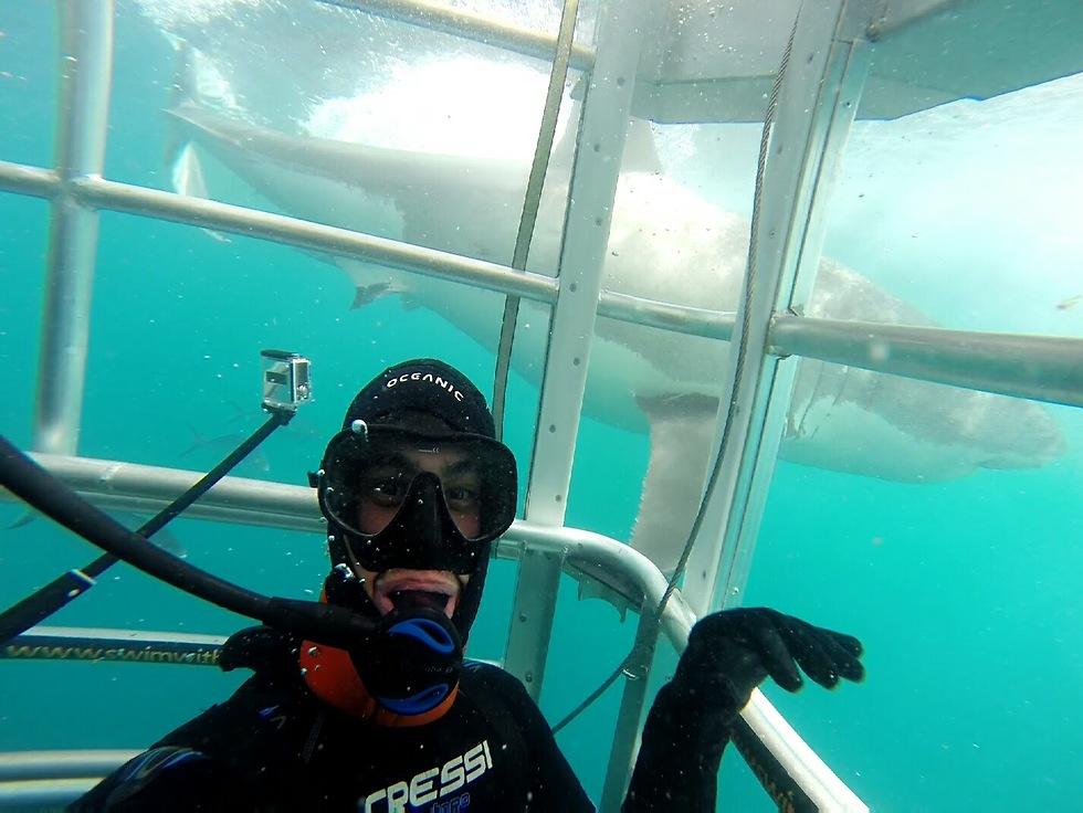 צולל עם כרישים בפורט לינקולן באוסטרליה ()