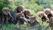 צילום: Yaron Schmid   YS Wildlife Photography & Safaris