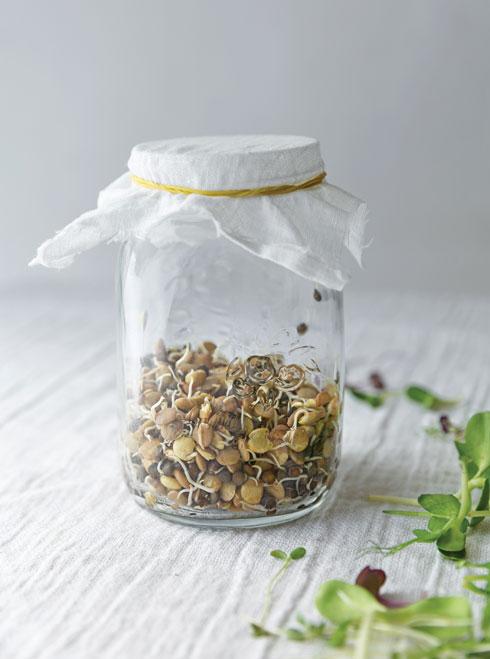 בריא, טעים, ומקצר תהליכים. בתמונה: עדשים שחורות מונבטות  (צילום: יעל אילן סגנון: נעמה רן)
