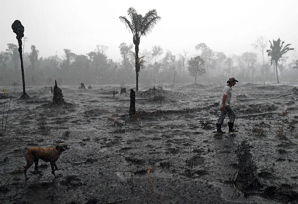 תמונות השנה AFP אזור שרוף אמזונס ברזיל מדינת רונדוניה  (צילום: AFP)