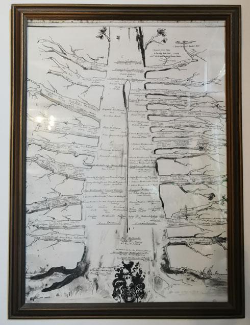 עץ המשפחה בביתה של רחל מולר (צילום: איתי יעקב)