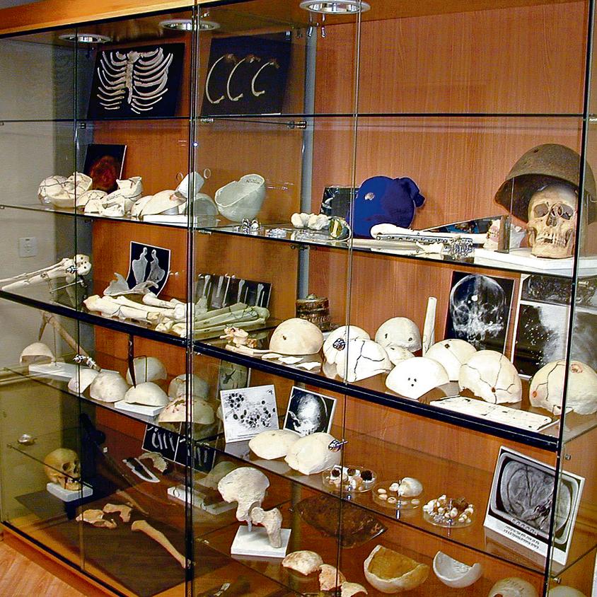 אוסף גולגולות ועצמות נוספות שהוצג במכון