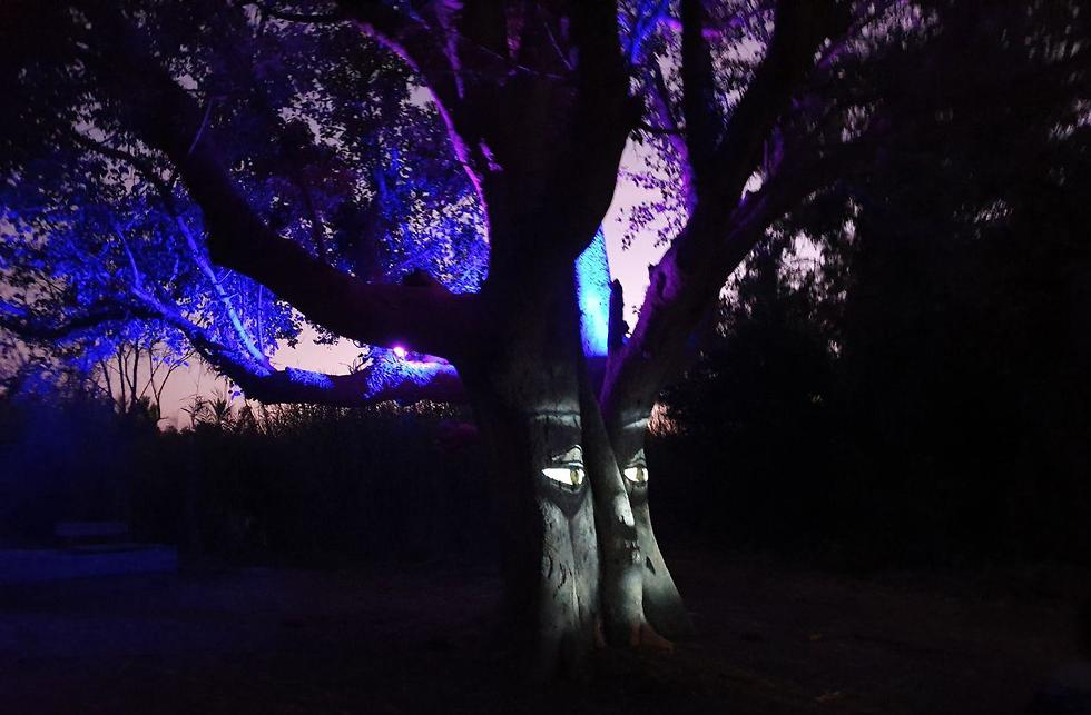 תופעת טבע בפארק הירדן (צילום: סער הס)