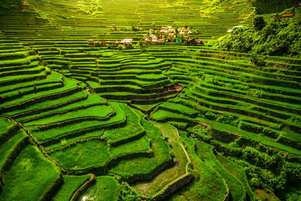 טרסות האורז של בנאווי – פלא עולם בפיליפינים.  (צילום: shutterstock)