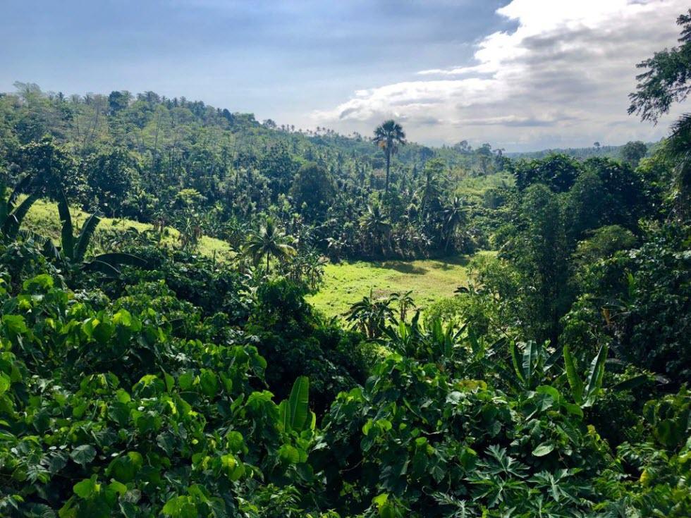 הטבע הוא המלך - בפיליפינים.  (צילום: מאגמה)