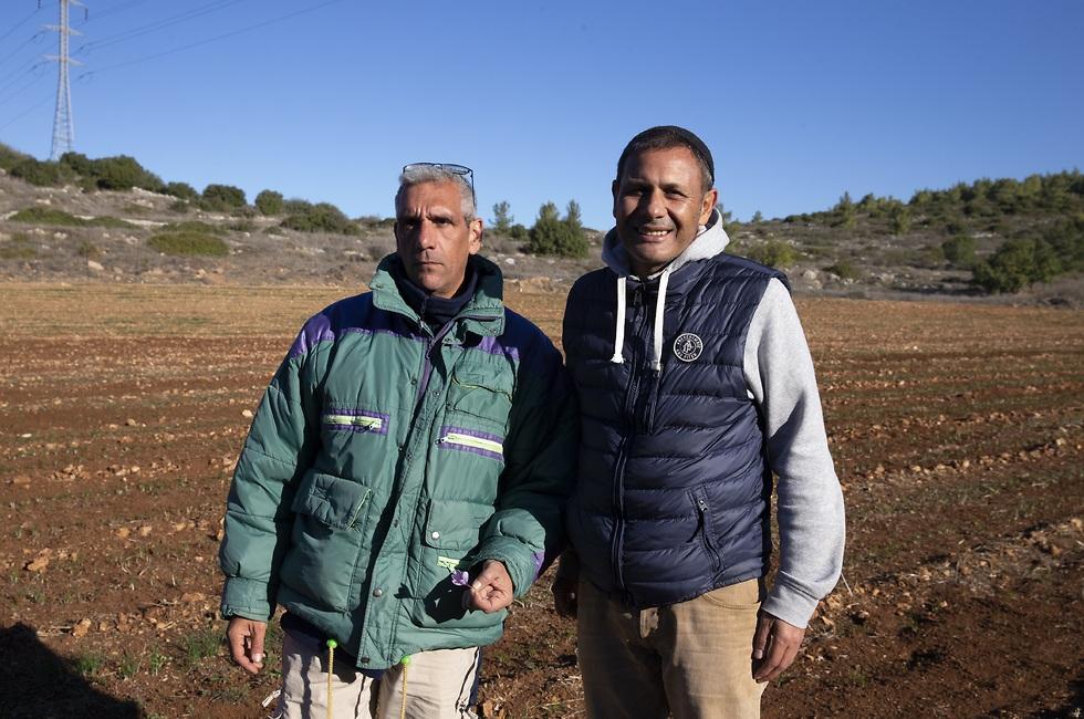 אשר ברונו כהן (מימין) ומשה קדם בשדה הזעפרן (צילום: עמית שאבי)