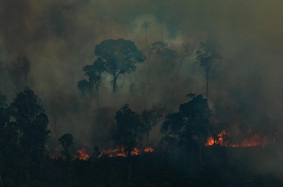 (צילום: Victor Moriyama / Greenpeace)