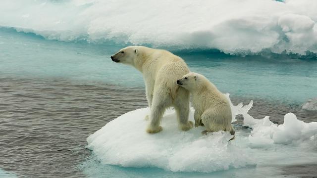 (צילום: © Larissa Beumer / Greenpeace)