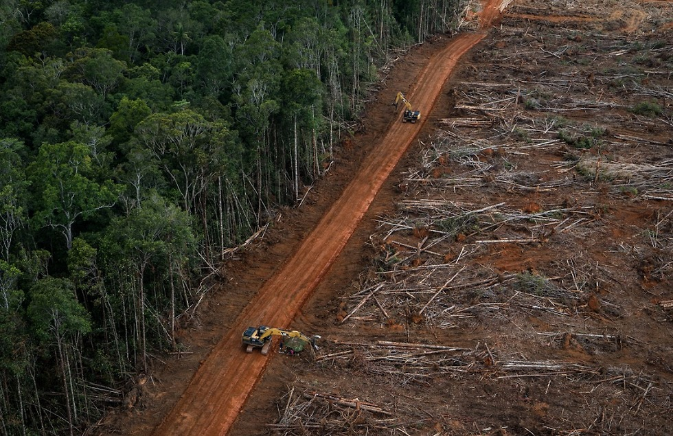 (צילום: Ulet Ifansasti / Greenpeace)