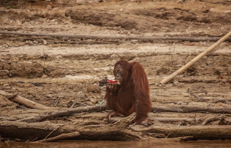 (צילום: Jurnasyanto Sukarno / Greenpeace)