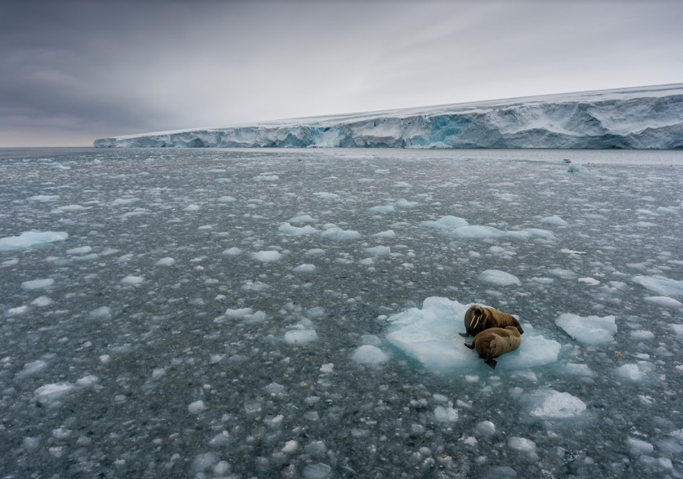 (צילום: Christian Åslund / Greenpeace)