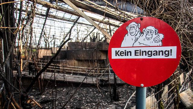 גרמניה שריפה קרפלד גן חיות בגלל כדורים פורחים עם אש בחגיגות השנה החדשה (צילום: AFP)