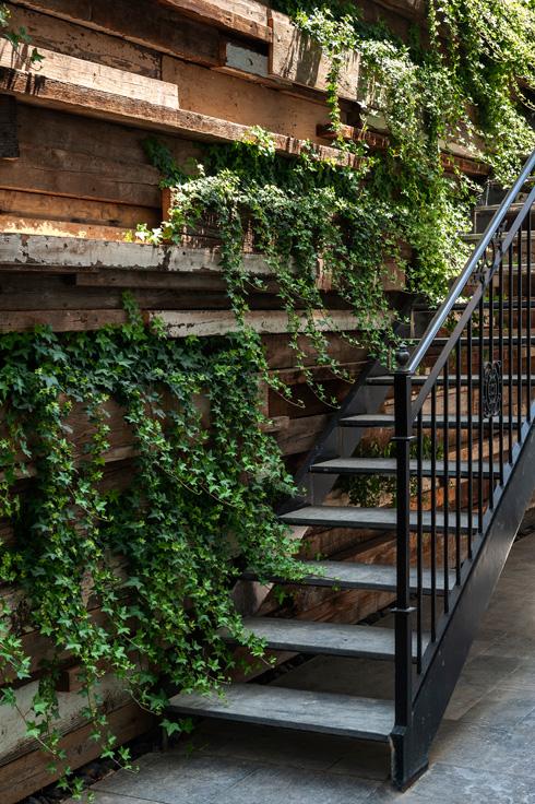 """ירוק בכל מקום. קיר חיצוני בבית שתוכנן ובוצע על ידי """"כרכום עיצוב נוף"""", אדריכלית: שרון וייזר (צילום: עודד סמדר)"""