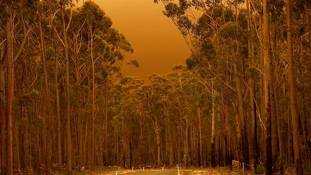 שריפות באוסטרליה (צילום: gettyimages)