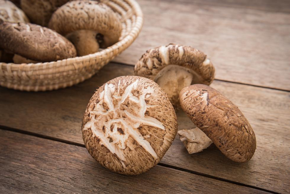 פטריות שי-טאקה (צילום: Shutterstock)