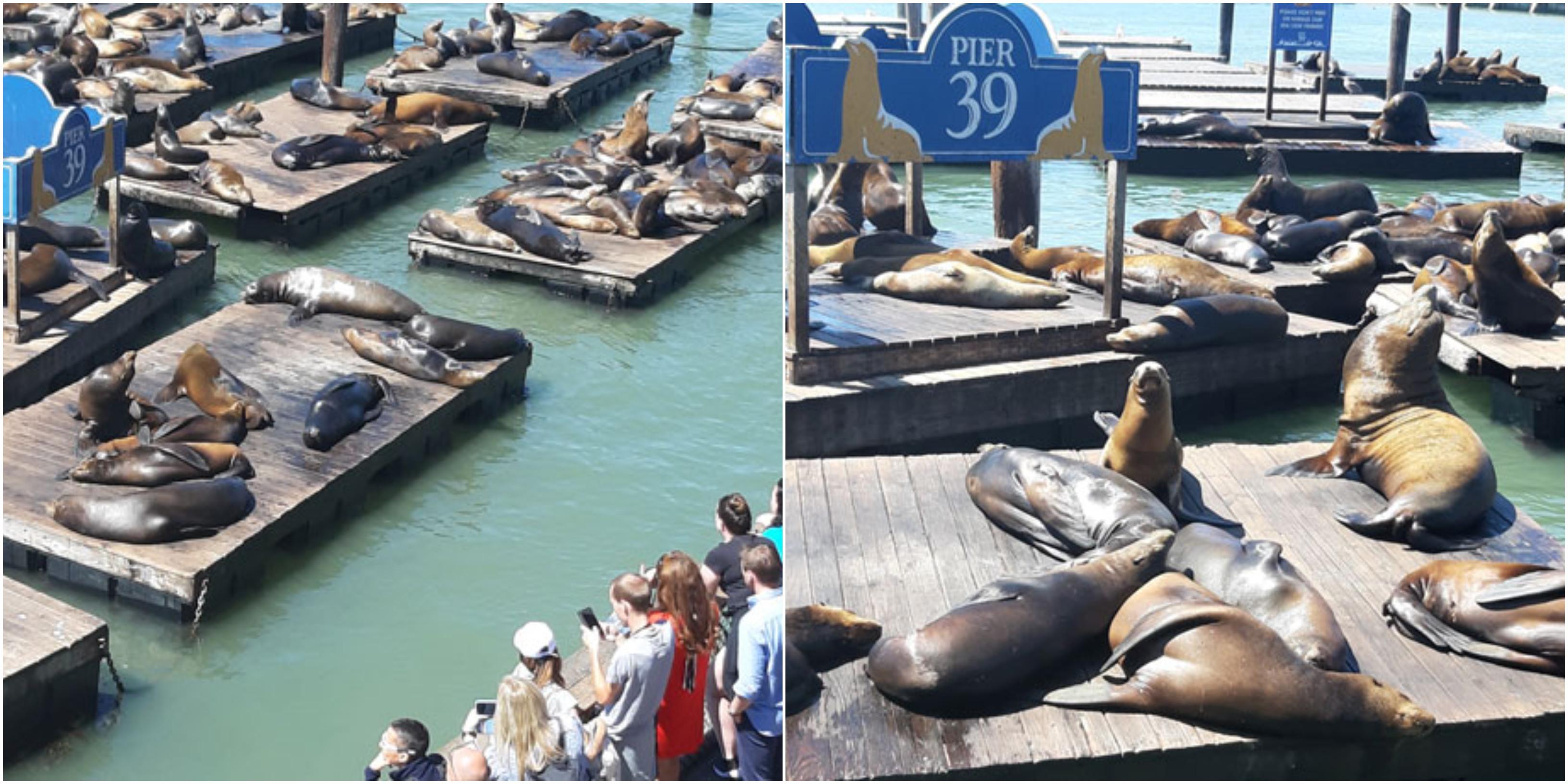 אריות ים (צילום: יונת אשחר)