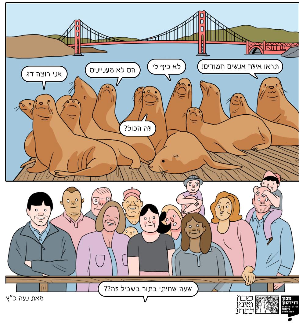 אריות הים ובני האדם. זה מול זה (איור: נעה כ