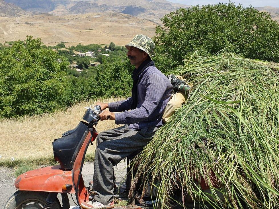 אוספים קציר לעונת הקיץ בארמניה.  (צילום: מאגמה)