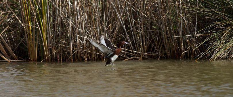 צוללי ביצות (צילום: איתי שמשון)