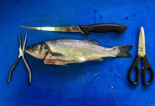דג (צילום: ליאור רפאל)