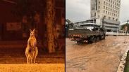 """צילוםף דוברות כב""""ה ו-AFP"""
