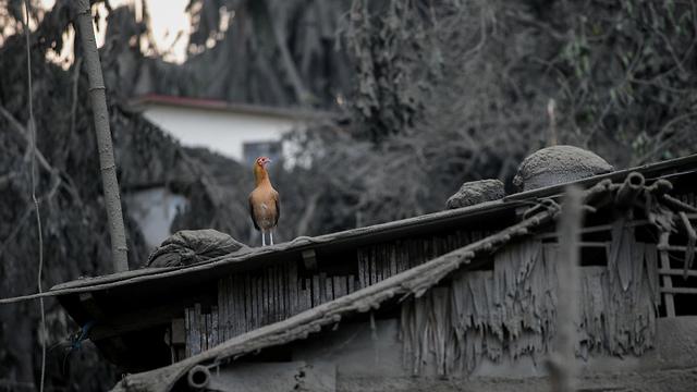 הפיליפינים פיליפינים התפרצות הר געש טאל טאליסיי (צילום: רויטרס)